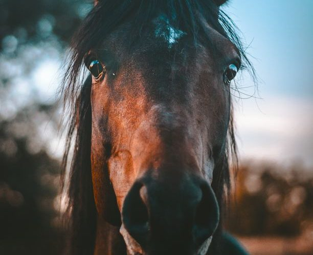 Möta morgonen på hästryggen